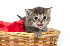Cute kitten crying Royalty Free Stock Photos