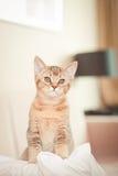 Cute kitten on cushion royalty free stock photography