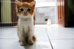 The cute kitten stock image