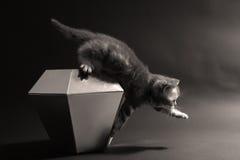 Cute kitten on a diamond Royalty Free Stock Photography