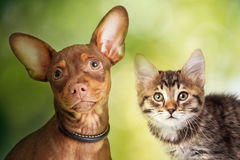 Cute Kitten and Dog Blurred Outdoor Scene Royalty Free Stock Photos