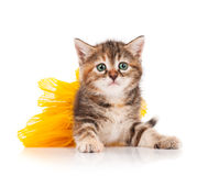 Cute kitten. Dressed in the tutu having a rest over white background stock photo
