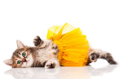 Cute kitten. Dressed in the tutu having a rest over white background royalty free stock photos
