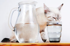 Cute kitten drinking Stock Image