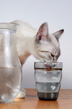 Cute kitten drinking Stock Photo