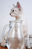 Cute kitten drinking Stock Photos