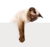 Cute kitten with empty board. Stock Photo