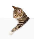 Cute kitten with empty board. isolated on white background Stock Photos
