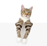 Cute kitten with empty board. isolated on white background Royalty Free Stock Image