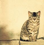 Cute kitten enjoying sunlight stock image