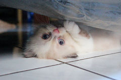 Cute kitten expression hiding Stock Photo