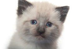 Cute kitten face Stock Photo