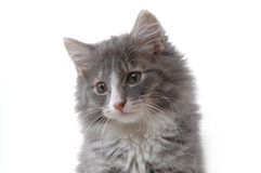 Cute kitten face. Close-up Royalty Free Stock Photo