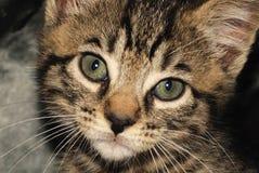Cute kitten. Face of a cute kitten royalty free stock photo