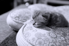 Cute kitten face Royalty Free Stock Photos
