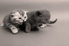 Cute kitten faces Stock Image