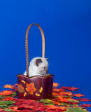 Cute kitten and fall leaves Royalty Free Stock Photo