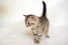 Cute kitten, a family friend. Royalty Free Stock Photo