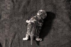 Cute kitten first steps Stock Photos