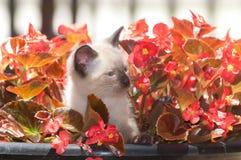 Cute kitten in flower pot Royalty Free Stock Photography