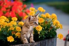 Cute kitten in flowers Stock Photos