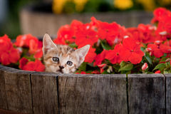 Cute kitten in flowers Stock Images
