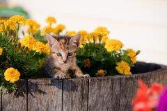 Cute kitten in flowers Stock Images