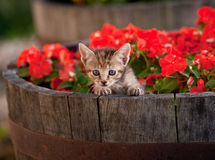 Cute kitten in flowers Royalty Free Stock Photography