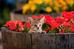 Cute kitten in flowers Stock Photos