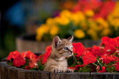 Cute kitten in flowers Royalty Free Stock Photo