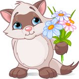 Cute kitten with flowers Royalty Free Stock Images