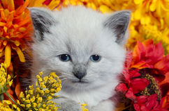 Cute kitten and flowers Stock Image