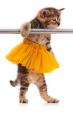 Cute kitten. Cute fluffy kitten dressed in the tutu posing near ballet barre over white background Stock Images