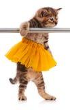 Cute kitten. Cute fluffy kitten dressed in the tutu posing near ballet barre over white background stock images