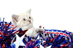 Cute kitten with Fourth of July decorations Royalty Free Stock Images