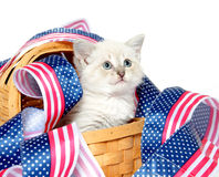 Cute kitten with Fourth of July decorations Stock Photo