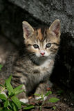 Cute kitten in the garden Royalty Free Stock Photo