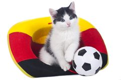 Cute kitten with german soccer fan stuff Stock Photo