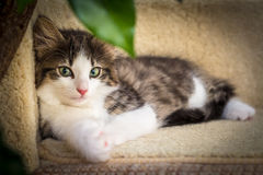 Cute kitten with green eyes. Resting on a tree Stock Photo