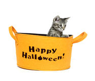 Cute kitten in Halloween basket Stock Photo