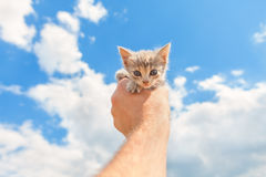 Cute kitten in the hand Stock Images