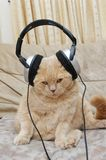 Cute kitten and headphones Royalty Free Stock Photo