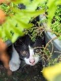 Cute kitten hide in garden Stock Photo
