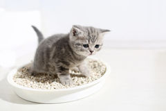 Cute kitten in his litter Royalty Free Stock Photos