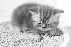 Cute kitten in his litter Royalty Free Stock Images
