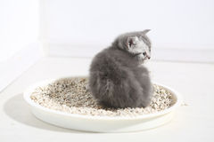 Cute kitten in his litter Stock Photo