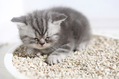 Cute kitten in his litter Stock Photos