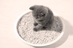 Cute kitten in his litter Stock Image