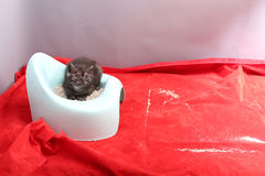 Cute kitten and his potty litter Stock Image