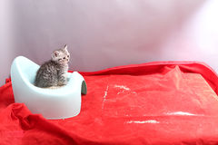 Cute kitten and his potty litter Stock Photos